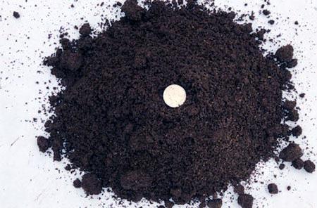 tea-compost.jpg